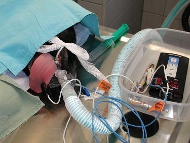 Inhalační anestezie